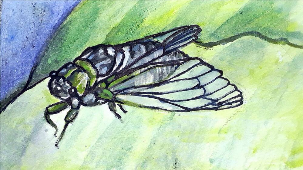 Gallery Play Saturday: Insects!